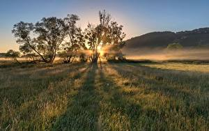 Фото Германия Утро Рассвет и закат Поля Дерево Moselle Valley