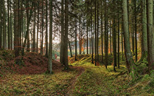 Фотография Германия Парк Осенние Бавария Дерево Мха Природа