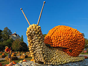 Фотографии Германия Тыква Улитки Дизайн Ludwigsburg Pumpkin Festival