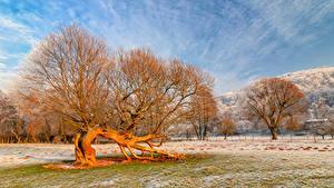 Фотографии Германия Деревья Иней Rheinland-Pfalz Природа