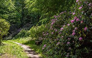 Обои для рабочего стола Германия Рододендрон Парк Кусты Тропинка Скамейка Wiesenburg Castle Park Природа