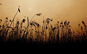 Фотографии Траве Силуэт Природа