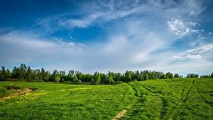 Картинки Луга Лес Небо Траве