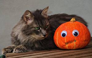 Обои для рабочего стола Хеллоуин Коты Тыква Животные