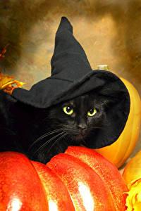 Обои Хэллоуин Коты Тыква Черная Шляпы животное