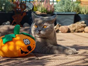 Обои для рабочего стола Хэллоуин Коты Тыква Смотрит животное