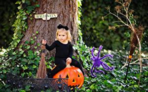 Фотографии Хеллоуин Тыква Пауки Девочки Сидит ребёнок