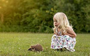 Фотографии Ежики Девочки Трава Дети Животные