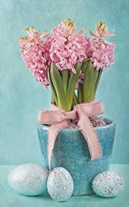 Фотография Праздники Пасха Гиацинты Цветной фон Яйцами Розовые Бантик Цветы