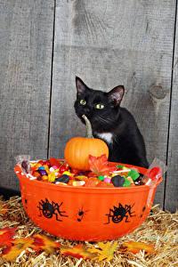 Обои Праздники Хеллоуин Коты Тыква Пауки Конфеты Животные