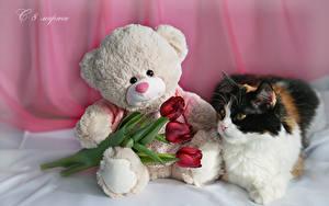 Фотографии Праздники 8 марта Коты Тюльпаны Мишки Русские Втроем Красный Цветы Животные