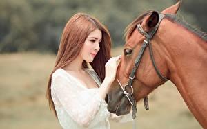 Фото Лошади Азиаты Шатенка Красивые Девушки Животные