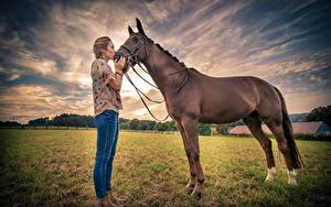 Фотография Лошади Поля молодые женщины Животные