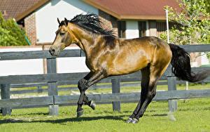 Фотографии Лошадь Бег Забором Сбоку Животные