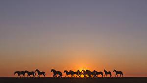 Обои Лошади Рассвет и закат Силуэты животное