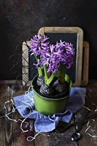 Обои Гиацинты Доски Фиолетовый Цветы