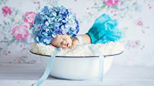 Фото Гортензия Грудной ребёнок Спит ребёнок