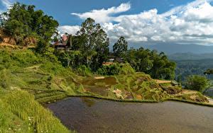 Фотографии Индонезия Тропики Вода Поля Холм Дерева Трава Limbong Природа