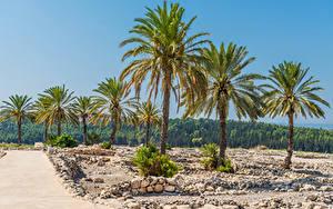 Картинки Израиль Парки Камень Леса Пальм Meguido National Park