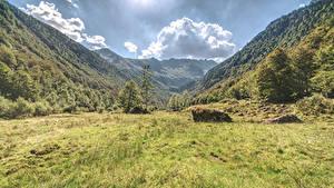 Фотография Италия Гора Альп Траве Дерево