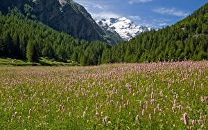 Фото Италия Гора Лес Луга Парк Альп Траве Gran Paradiso national Park Природа
