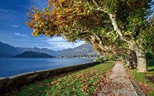 Фото Италия Горы Озеро Осенние Набережной Дерево Лист Альпы Lago di Como, Tremezzo Природа