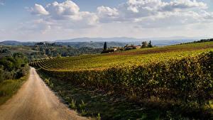 Фотография Италия Дороги Виноградник Тоскана Природа
