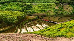 Картинки Япония Поля Трава Природа