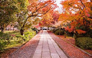 Обои Япония Киото Парк Осенние Аллеи Дерево Кустов Листва
