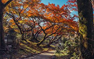 Картинка Япония Киото Парки Осень Деревья Листья Ствол дерева Мха Maruyama Park