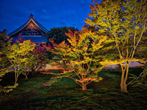 Фото Япония Киото Парки Осенние Дерево В ночи Природа