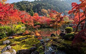 Фото Япония Киото Парки Речка Деревья