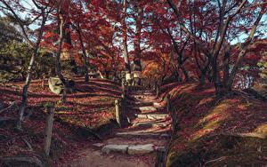 Обои Япония Парки Осенние Дерева Листва Лестницы Shukkeien Garden Hiroshima