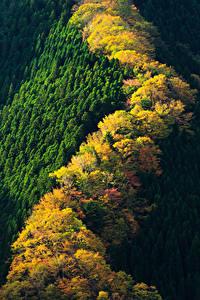 Картинка Япония Парки Леса Осенние Сверху Nara Park Природа