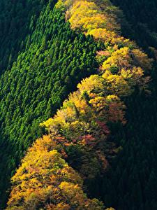 Картинка Япония Парки Леса Осенние Сверху Nara Park