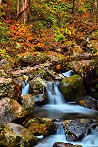 Обои Япония Парки Камни Осень Мхом Ручеек Kongorinji Temple Shiga