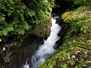 Фотографии Япония Водопады Утес Мох Takachiho Gorge
