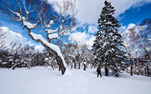 Картинки Япония Зимние Снег Деревья Ель Sapporo Hokkaido