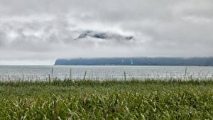Картинка Камчатка Россия Река Трава Туман Природа