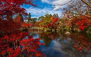Фотография Киото Япония Парк Речка Мост