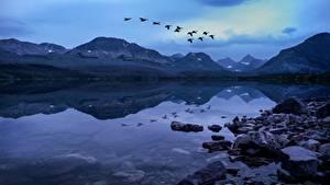 Картинка Озеро Камень Горы Птица Парки США Вечер Летит Glacier National Park, Rocky Mountains, Montana