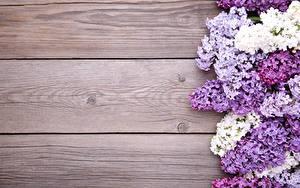 Фотография Сирень Доски Шаблон поздравительной открытки Цветы