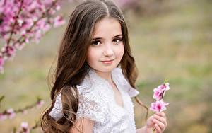 Картинка Девочки Смотрит Шатенка Волосы Милые Дети