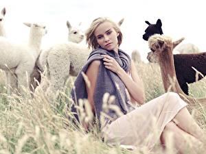 Картинка Лама Траве Блондинок Сидя Смотрит Рука Alpaca Девушки