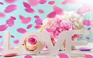 Фото Любовь День всех влюблённых Слова Английская цветок