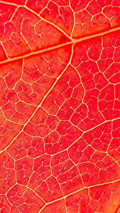Картинки Макросъёмка Текстура Красный Листья Природа