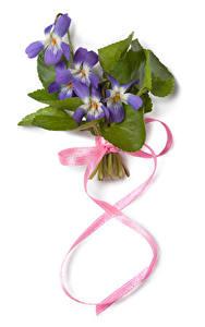 Фотографии Международный женский день Шафран Белом фоне Фиолетовая Ленточка цветок