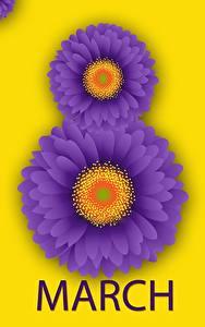 Фотографии Международный женский день Герберы Английский Цветы