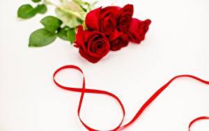 Фотография Международный женский день Праздники Белый фон Цветы