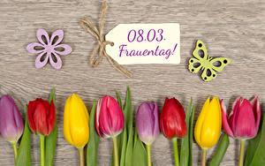Фотография Международный женский день Тюльпаны Бабочки Доски Немецкий Разноцветные Цветы